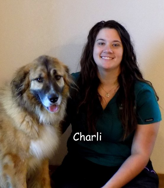 Team member Charli sitting with a large tan and white dog