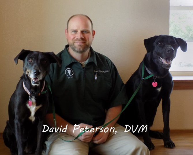 Team member Dr. David Paterson with two large black and white dogs